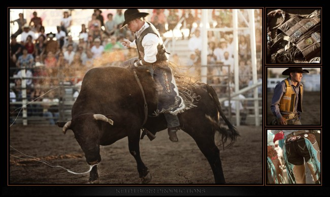 Steer at Rodeo